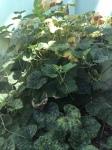 "Week 51: Plant a vegetable ""garden"""